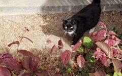 SJCC's paw-some neighbor